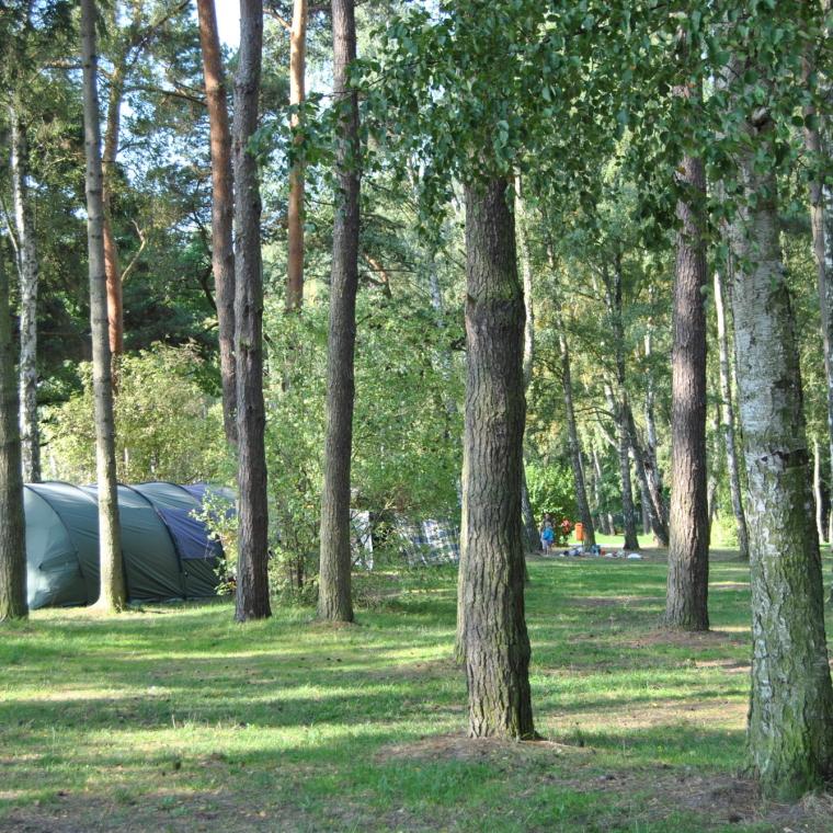 Standplätze für Zelte im Wald