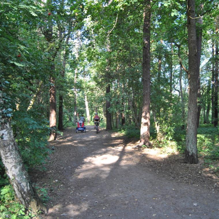 Durch den Wald zum Ostseestrand